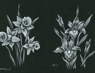 Daffodils-Iris-e1464353511896-1024x724