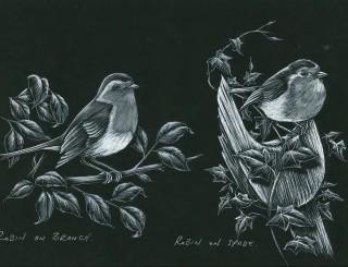 Robin on Branch Robin on Spade